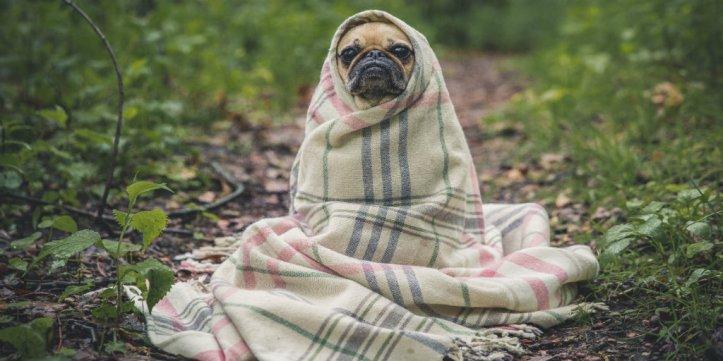 dog blanket (1)